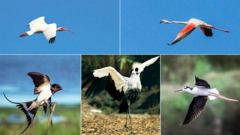 genesis,zeemonsters,vogels,God schiep vanaf allereerste begin