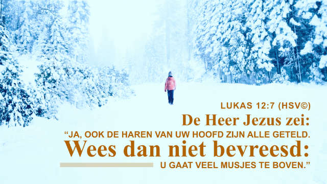 Bijbeltekst van de dag – Lukas 12:7